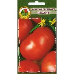 POMIDOR GRUNTOWY GIGANT 1G