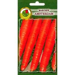MARCHEW AMSTERDAM 5G