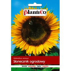 Słonecznik ogrodowy 10G