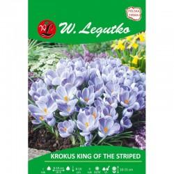 KROKUS KING OF THE STRIPED 7SZT LEGUTKO