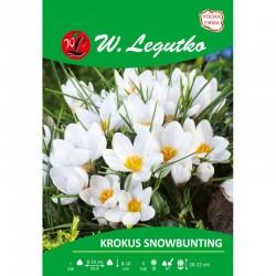 KROKUS SNOWBUNTING 10SZT LEGUTKO