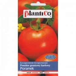 Pomidor gruntowy karłowy PORANEK
