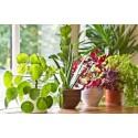 Do kwiatów domowych / balkonowych